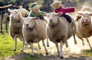 Яхане на овцете
